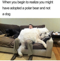 😂😂: When you begin to realize you might  have adopted a polar bear and not  a dog 😂😂