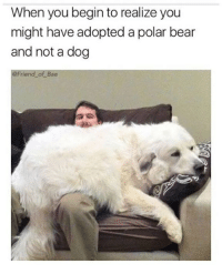 polarization: When you begin to realize you  might have adopted a polar bear  and not a dog  Friend of Bae