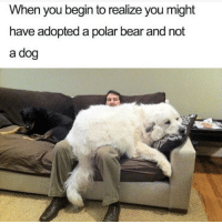 Memes, Bear, and Butterfly: When you begin to realize you might  have adopted a polar bear and not  a dog Follow my other accounts @antisocialtv @x__social_butterfly__x @lola_the_ladypug ❤️