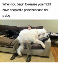 Memes, Bear, and 🤖: When you begin to realize you might  have adopted a polar bear and not  a dog