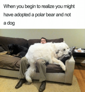 Dog Memes - Funny Pictures with Dogs and Puppy: When you begin to realize you might  have adopted a polar bear and not  a dog Dog Memes - Funny Pictures with Dogs and Puppy