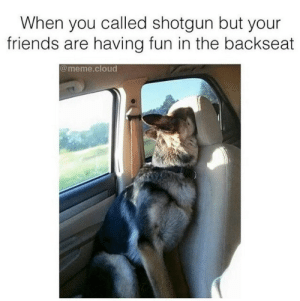 Friends, Meme, and Cloud: When you called shotgun but your  friends are having fun in the backseat  @meme.cloud