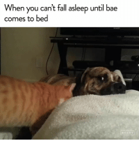 Aww, so sweet! [via @jukinmedia​]: When you can't fall asleep until bae  comes to bed  BERRY Aww, so sweet! [via @jukinmedia​]