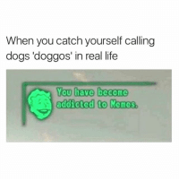 Dogs, Life, and Memes: When you catch yourself calling  dogs 'doggos' in real life  You have become  adicted to Memes. Memes are my drug of choice.