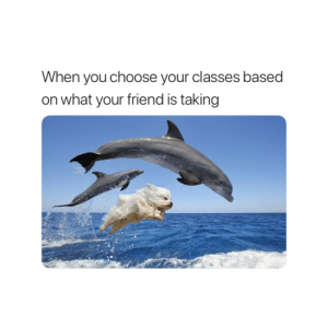 Friend, You, and What: When you choose your classes based  on what your friend is taking