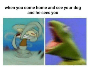 Good, Home, and Dog: when you come home and see your dog  and he sees you Good Boye