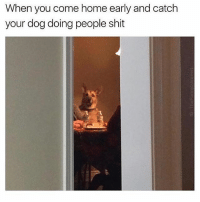 🤔: When you come home early and catch  your dog doing people shit 🤔