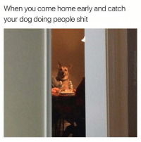 Who's dogs is this? 😂😂: When you come home early and catch  your dog doing people shit Who's dogs is this? 😂😂