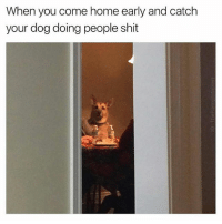 When You Coming Home: When you come home early and catch  your dog doing people shit