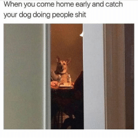 I get my memes from @comedykhazi 😂: When you come home early and catch  your dog doing people shit I get my memes from @comedykhazi 😂
