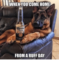 Dogs, Love, and Memes: WHEN YOU COME HOME  Extra  FROM RUFF DAY This is too perfect 😂🐶, smash that like if you love dogs too 👊♥️