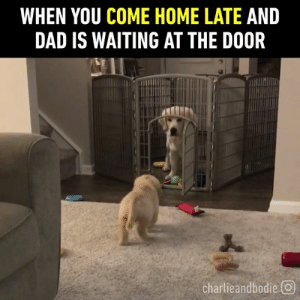 "Charlie, Dad, and Dank: WHEN YOU COME HOME LATE AND  DAD IS WAITING AT THE DOOR  charlieandbodie回 ""You are GROUNDED!""  By Charlie and Bodie"