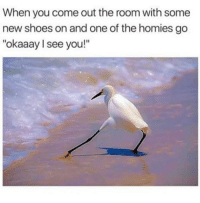 "Meme, Shoes, and Http: When you come out the room with some  new shoes on and one of the homies go  ""okaaay I see you!"" <p>Swaggy Seagull (unofficial title) meme may be a surprise contender for Meme of the Month, suggest investing via /r/MemeEconomy <a href=""http://ift.tt/2vw8ozz"">http://ift.tt/2vw8ozz</a></p>"