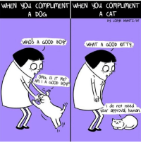lol: WHEN you COMPLIMENT WHEN you ComPLIMENT  A CAT  A DOG  By LORVN BRANTZ/BF  WHOS A GOOD BOVP  WHAT A GOOD KTTy  OMG, IS IT ME?  Am I A GOOD B0yr!  I do not need  A your approval, human lol
