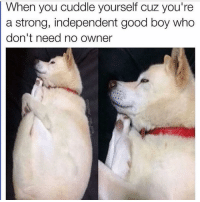 This dog is so extra I love it 😂🐶🐾 @kevin_the_kiddd: When you cuddle yourself cuz you're  a strong, independent good boy who  don't need no owner This dog is so extra I love it 😂🐶🐾 @kevin_the_kiddd