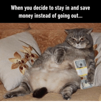 9gag, Meme, and Memes: When you decide to stay in and save  money instead of going out What I'm gonna do this weekend.⠀ -⠀ Check out our IG story for meme videos.⠀ weekend cat stayin 9gag