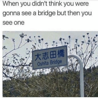 Memes, 🤖, and One: When you didn't think you were  gonna see a bridge but then you  see one  Oshita BridgeT @hardcorecomedy2.0 is a must follow