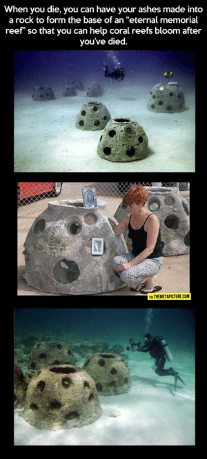 """Tumblr, Blog, and Help: When you die, you can have your ashes made into  a rock to form the base of an """"eternal memorial  reef"""" so that you can help coral reefs bloom after  you've died.  VIA THEMETAPICTURE.COM srsfunny:Now This Is Something Worth Dying For"""