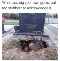 Flowers, Dank Memes, and Graves: When you dig your own grave, but  too stubborn to acknowledge it..  CA AEUOM  IG Taxo I brought flowers to @_taxo_ 's grave just to find him in a hole weeping under his grandads tombstone 😅 we both cried