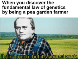 Memes, Work, and Discover: When you discover the  fundamental law of genetics  by being a pea garden farmer  lt ainit uch. but it's honestWorrk  onest work  0 Credit: Turhan Pathan