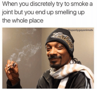 Memes, Discretion, and 🤖: When you discretely try to smoke a  joint but you end up smelling up  the whole place  openly gayanimals