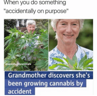 "Funny, Grandma, and Discover: When you do Something  ""accidentally on purpose""  @openly gay animals  Grandmother discovers she  been growing cannabis by  accident Grandma a G 😂✊🏿"