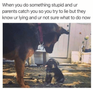 Doing something stupid by Holofan4life FOLLOW 4 MORE MEMES.: When you do something stupid and  parents catch you so you try to lie but they  know ur lying and ur not sure what to do now Doing something stupid by Holofan4life FOLLOW 4 MORE MEMES.