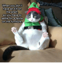 Much cuter then that scary elf anyway...: When you don't  have an Elf on  the shelf  so you have to  settle for a feline  on the furniture Much cuter then that scary elf anyway...