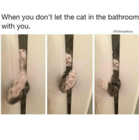 Awe Kitty kitter Ha ha. I'm weak flatlined dead pettypost nochill teamnoharmdone noharmdone: When you don't let the cat in the bathroom  with you.  Drs mashlove Awe Kitty kitter Ha ha. I'm weak flatlined dead pettypost nochill teamnoharmdone noharmdone