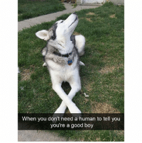Funny, Animal, and Good: When you don't need a human to tell you  you're a good boy Hilarious animal snaps
