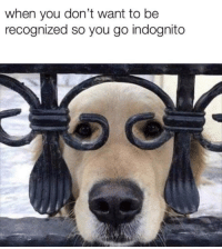 You, When You, and  Want: when you don't want to be  recognized so you go indognito Indognito
