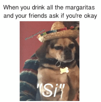 Friends, Okay, and Girl Memes: When you drink all the margaritas  and your friends ask if you're okay  nofucks  eg  ono My lil' puggle hates me 😂