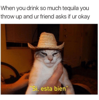 """Memes, Party, and Okay: When you drink so much tequila you  throw up and ur friend asks if ur okay  Si, esta bien"""" The party is just getting started my friend"""