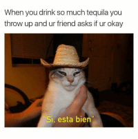 Oh tequila tequila mexican si esta bien cat sambrero hat drinking drunk shots studentmemes notmine memes dankmemes memeheaven twittermemes twitter tumblr tumblrmemes funnymemes humor: When you drink so much tequila you  throw up and ur friend asks if ur okay  Si, esta bien Oh tequila tequila mexican si esta bien cat sambrero hat drinking drunk shots studentmemes notmine memes dankmemes memeheaven twittermemes twitter tumblr tumblrmemes funnymemes humor