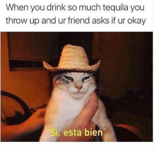 Yeah I'm good: When you drink so much tequila you  throw up and ur friend asks if ur okay  Si. esta bien Yeah I'm good