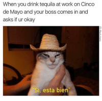 """Of course I'm okay... *Swallows vomit* 🤢: When you drink tequila at work on Cinco  de Mayo and your boss comes in and  asks if ur okay  Si, esta bien"""" Of course I'm okay... *Swallows vomit* 🤢"""