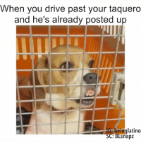 post up: When you drive past your taquero  and he's already posted up  beinglatino  SC: