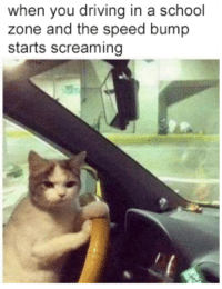 Driving, Memes, and School: when you driving in a school  zone and the speed bump  starts screaming Third time this week! via /r/memes https://ift.tt/2PAiIN3
