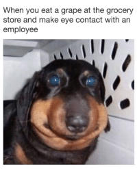 Eye, Make, and You: When you eat a grape at the grocery  store and make eye contact with an  employee