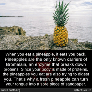 Digest: When you eat a pineapple, it eats you back.  Pineapples are the only known carriers of  Bromelain, an enzyme that breaks down  proteins. Since your body is made of protein,  the pineapples you eat are also trying to digest  you. That's why a fresh pineapple can turn  your tongue into a sore piece of sandpaper.  ird-facts.org  we  @factsweird