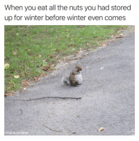 Funny, Winter, and Kindness: When you eat all the nuts you had stored  up for winter before winter even comes  @tank.sinatra I will rely on the kindness of strangers