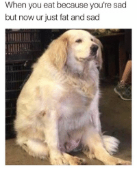 Memes, Fat, and Sad: When you eat because you're sad  but now ur just fat and sad @friendofbae is always posting 🔥🔥😂