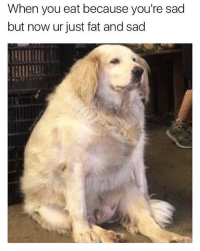 Memes, Relatable, and Fat: When you eat because you're sad  but now ur just fat and sad so heckin relatable (@dabmoms)