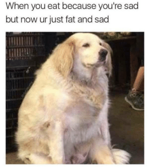 Fat, Sad, and Who: When you eat because you're sad  but now ur just fat and sad Who can relate this ?