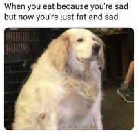 Funny, Fat, and Sad: When you eat because you're sad  but now you're just fat and sad 😂😂