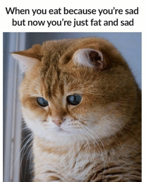 15 Addictively Funny Stress Eating Memes #sayingimages #memes #funnymemes #stresseatingmemes: When you eat because you're sad  but now you're just fat and sad 15 Addictively Funny Stress Eating Memes #sayingimages #memes #funnymemes #stresseatingmemes