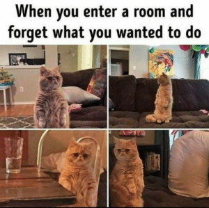 The art of …wait I forgot.: When you enter a room and  forget what you wanted to do The art of …wait I forgot.