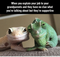 "9gag, Memes, and Chameleon: When you explain your job to your  grandparents and they have no clue What  you re talking about but they re supportive ""that's nice dear"" 👵🏼 Follow @9gag - - 📷@emma_the_ward ✍🏻broazay 