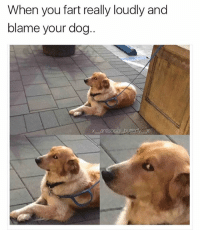 Memes, Butterfly, and Antisocial: When you fart really loudly and  blame your dog Follow my main @x__antisocial_butterfly__x