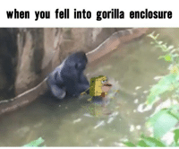 Gorilla Meme: when you fell into gorilla enclosure